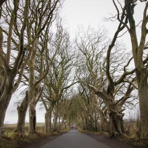 The (leafe-less) Dark Hedges